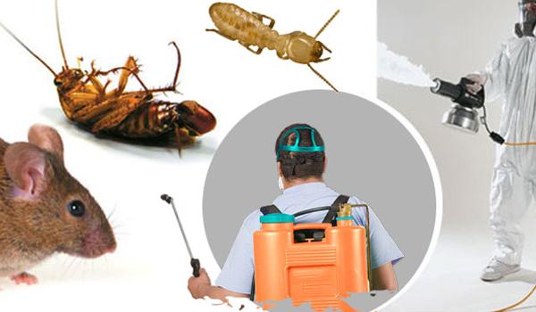 pest control services