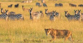 amazing African Safari Vacation
