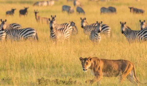 amazing African Safari Vacation